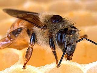 Bee Control Mesh