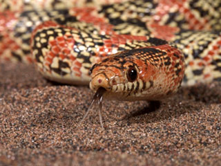 Snake Control Mesh