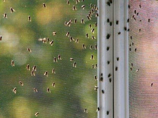 Insect Window Screen