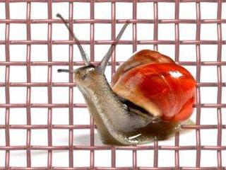 Snail Conrol
